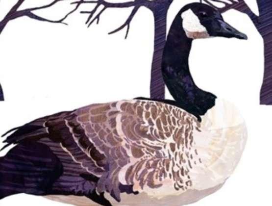 Giovedì 6 Dicembre – L'Oca d'Inverno